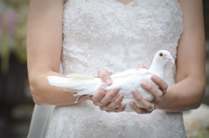 wedding dove - for Jennifer's wedding dress story