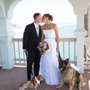 From Puppy Love to Wedding Dress Alterations